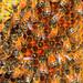 Honey I'm home by EF661AV
