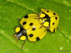 Coleoptera of Ecuador