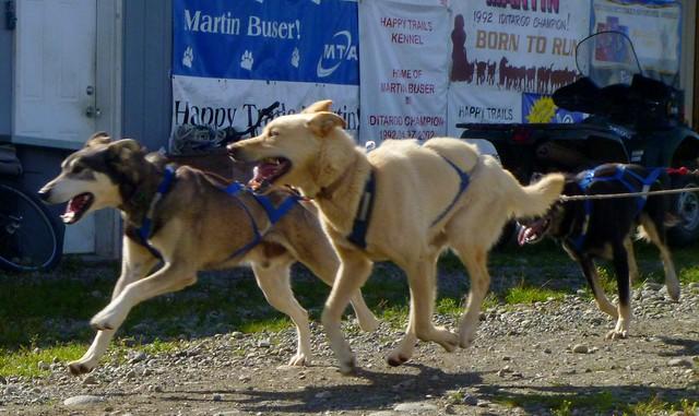Dog Kennels Wasilla Ak