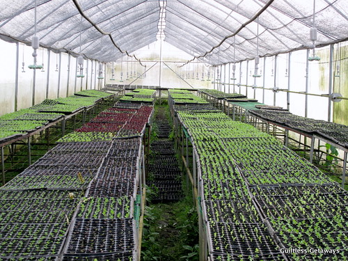 organic-farm-nursery-costales-nature-farms.jpg