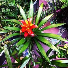 flower, leaf, ti plant, plant, flora, floristry,