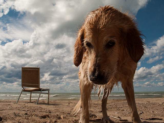 Dog Sky Beach Chair