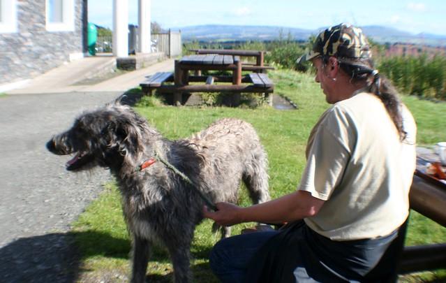 Scottish Deer Hound, Aberfoyle