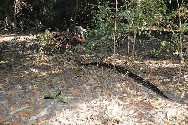Fauna impressionante de Madagascar. 7982381746_fa1bd1ec52_z