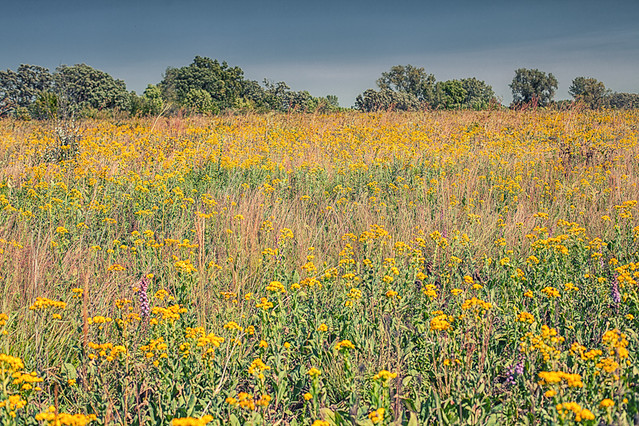 Prairie at Governor Nelson State Park