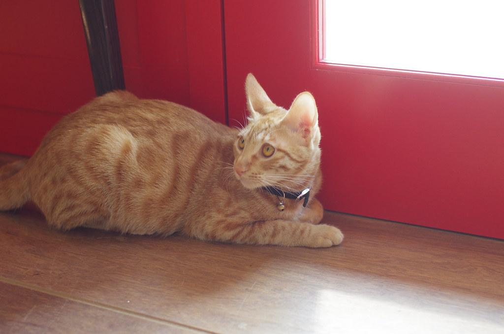 貓旅行輕食咖啡館