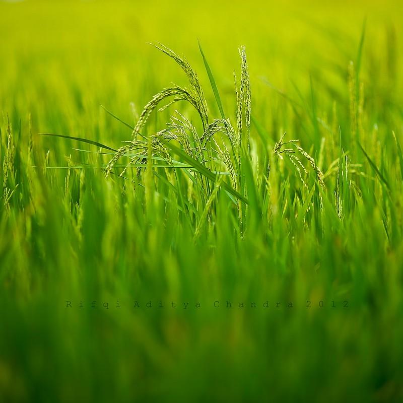 IMAGE: http://farm9.staticflickr.com/8322/7999304284_b88b1e80fd_c.jpg