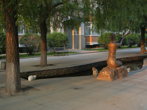 Cats in Shenyang, China _ 9941