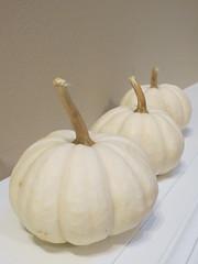 White Pumpkins 9.18