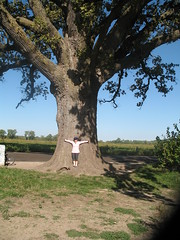 Big Oak Dame