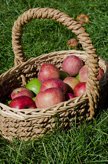 Apples-0142