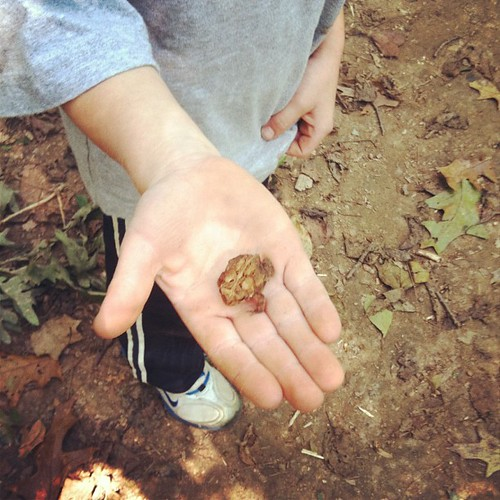 Eli's find on our nature walk...
