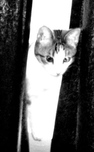 Week 39: Ghost Kitteh