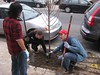Planting trees on Wolf St