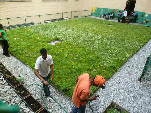 Students in the Bronx are able to use their school's newly built green roof to learn both natural sciences and green-collar job skills. Photo by Elizabeth Peters