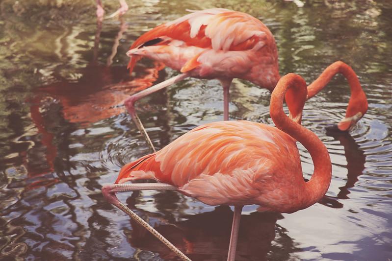 Flamingo Gardens 27