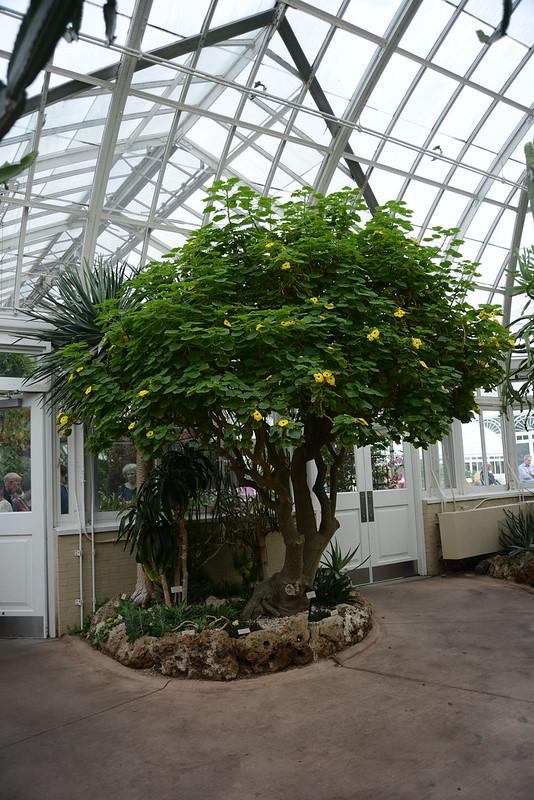 NYC Botanical Garden
