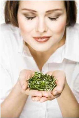 Rosemary a secret scent for refreshing brain