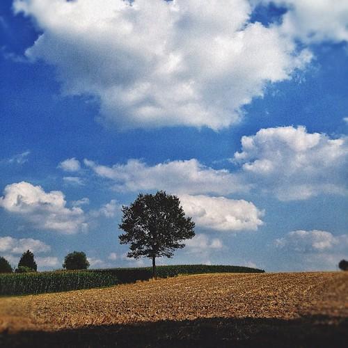 Solo tree…