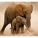 WWF-Canon Pic of the week - African Elephants