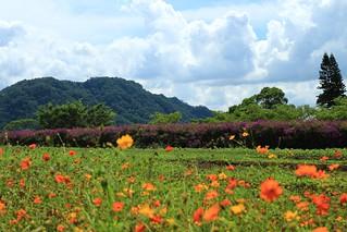 Изображение 大溪花海農場. flower taiwan taipei 花 台灣 台北 桃園 canon1740mmf4l canon650d