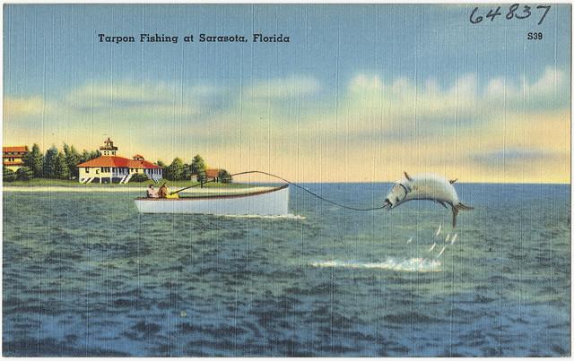Tarpon fishing at sarasota florida file name 06 10 for Sarasota florida fishing