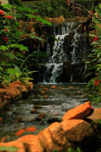 india canon rebel bangalore waterfalls karnataka butterflypark bannerghattanationalpark vanila bannerghattapark bannerghattazoo canon550d rebelt2i vanilabalaji