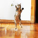 Stop Taking Photos of Your Cat! by kirstiecat