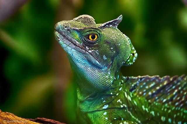 Little Dino