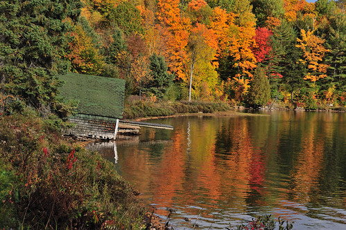 fall automne parc