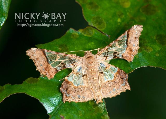 Moth - DSC_8166