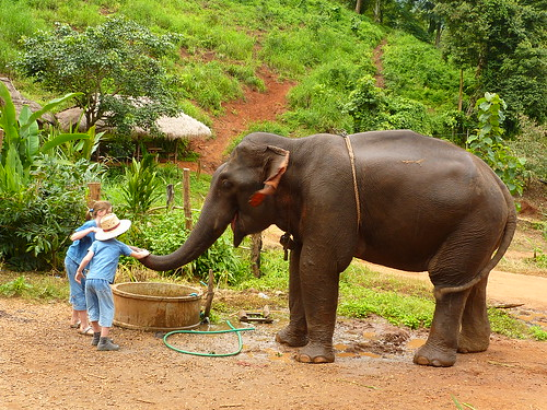 Elephant camp, Chiang Mai