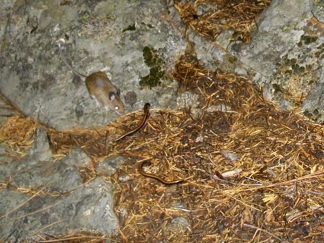 mice and millipedes