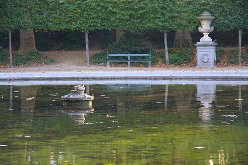 Park Pond Duck