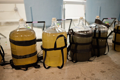 Carboys of runoff