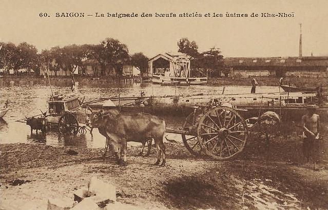 SAIGON - La baignade des boeufs attelés et les usines de Kha-Nhoi