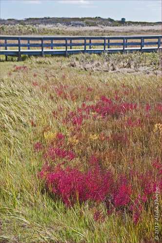Autumn Marsh Grass by Alida's Photos