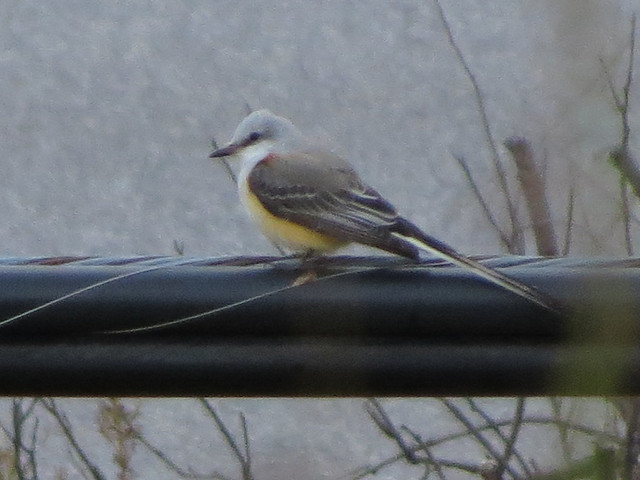 just an eBird record shot