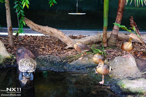 WILD LIFE Sydney Zoo freshwater turtle