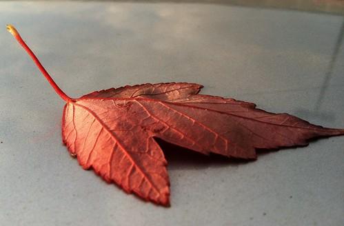Week 42: It's okay, I'm a leaf on the car top!