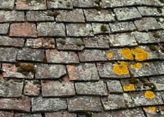 Roof Tiles, Barker Tower, York