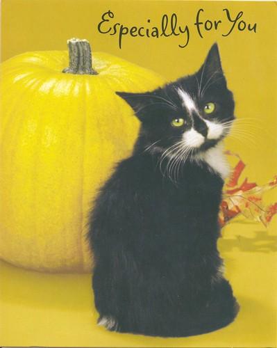 Halloween Cat & Pumpkin