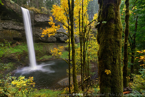 autumn tree fall leaves oregon waterfall moss maple seasons trunk silverfalls tomschwabel southfalls