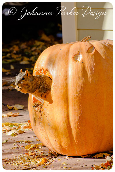 Little-Squirrel-&-Pumpkin-9