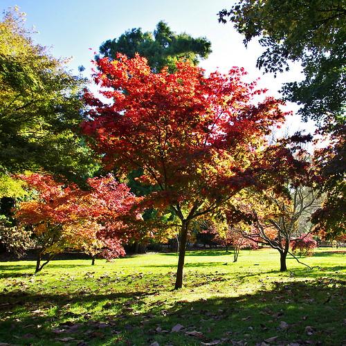 27x2012 Roath Park_15