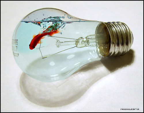 Fishy Lightbulb
