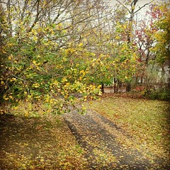 #driveway After #Sandy #newhampshire #leaves #leaf #fall #newengland