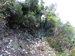 Chemin de la Montagne après le Valdu Grande : dernier démaquisage du 30/10/2012