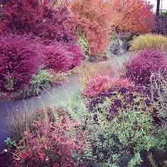 Autumn in Ballard
