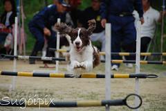 dog sports(1.0), animal sports(1.0), dog(1.0), sports(1.0), pet(1.0), mammal(1.0), conformation show(1.0), dog agility(1.0),